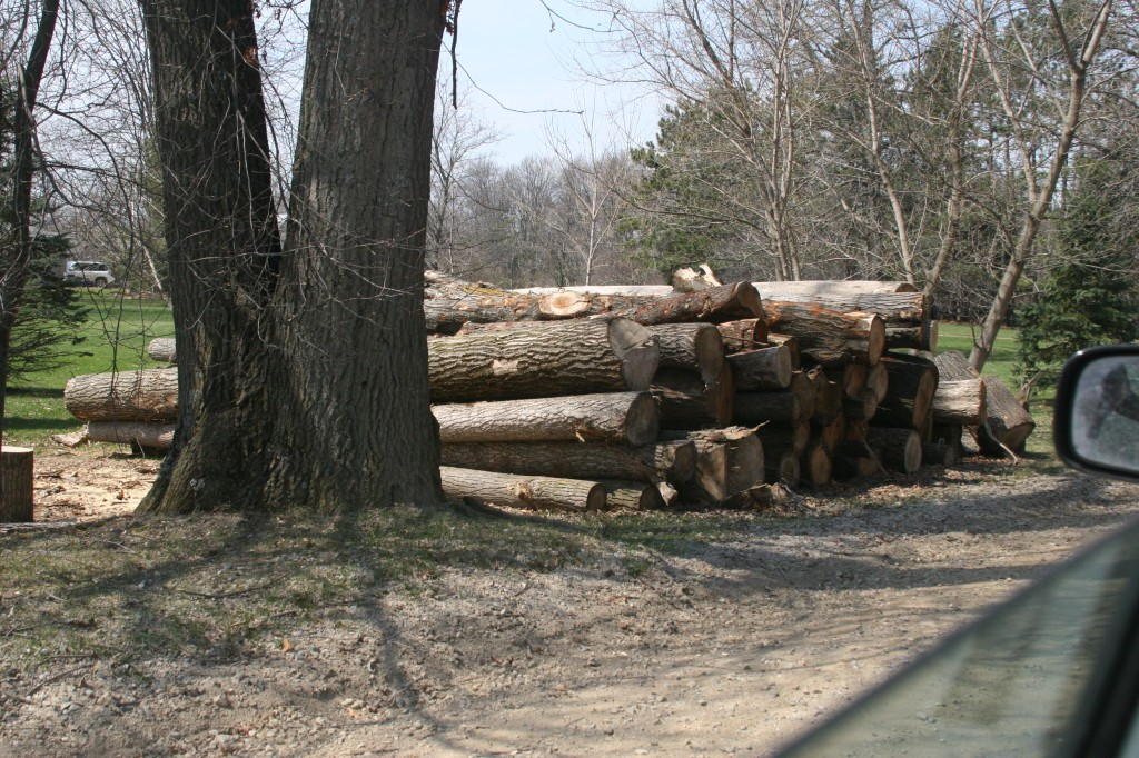 A pile of trees cut by Enbridge. Photo by MI CATS.